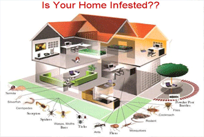 Is Your House Infected